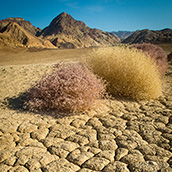 Dried earth Badwater Road near Golden Canyon in Death Valley National Park, CA.  National Park Photograpy by Alex Wilson.