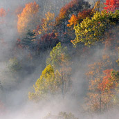 Morning fog blanketing the trees in Sutton, West Virginia.  Landscape Photograpy by Alex Wilson.