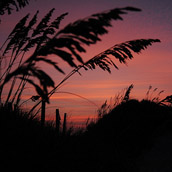 Sea oats, taken at sunset in the Outer Banks, North Carolina.  Landscape Photograpy by Alex Wilson.