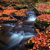 Fall color in Pendleton County, West Virginia.  Landscape Photograpy by Alex Wilson.